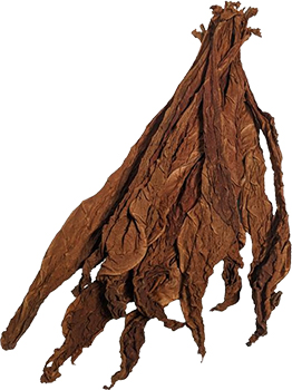Giant Light Fire-Cured - Tobacco Leaves