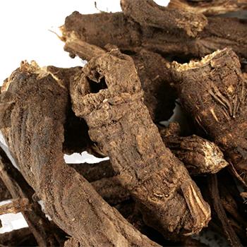 Bear Root (Osha)