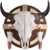 Medicine Wheel Buffalo Skull