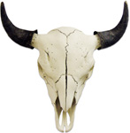 Plain Bull Buffalo Skull with Horn Covers
